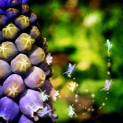 When Faeries Are Born (daybeezho) Tags: green purple fairies grape faeries hyacinth texturebyghostbones pixiebrushesbyobsidiandawn