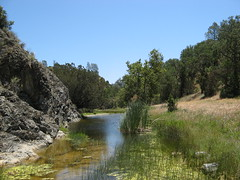 North Fork, Pacheco Creek