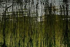 Future (CarloAlessioCozzolino) Tags: reflection water river fiume dream vision future acqua riflessi futuro sogno eleanorroosevelt blueribbonwinner visioni the4elements flickrunitedaward