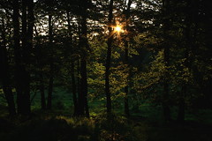 Sunset in the Woods and Maedows (rolfspicture) Tags: trees light sunset sun green woods meadows leafs blueribbonwinner