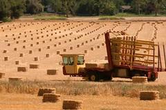 Hay Harvest (Randy Son Of Robert) Tags: grass truck farm harvest machine rows hay bail