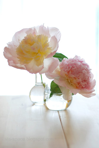 Peonies from the garden 3