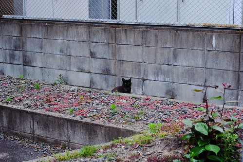 Today's Cat@20090607