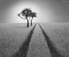 Listen to Wisdom (Ben Heine) Tags: life travel light shadow wild summer blackandwhite bw sun tree love nature monochrome grass composition season landscape photography freedom countryside vanishingpoint poem peace photographie belgium time nikond70 earth geometry lumire branches duo details perspective champs philosophy boom melody amour libert harmony memory poet planet terre fields spirituality wisdom conceptual paysage campagne arbre share contrejour vie subtle sauvage saison partage bl sagesse blueribbonwinner digitalshot petersquinn mywinner benheine hannut hubertlebizay hubzay flickrunited bestcapturesaoi obramaestra wheatontheear elitegalleryaoi infotheartisterycom