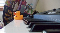 duck on keyboard (kerosene eyes.) Tags: duck keyboard piano rubber