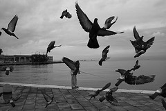 (Donato Buccella / sibemolle) Tags: street sea blackandwhite bw italy birds fly fisherman mare pigeons explore frontpage digitalphoto takingflight bora trieste pescatore piazzaunitditalia canon400d sibemolle fotografiastradale