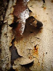 Textura (Errlucho) Tags: textura errlucho lsuarez