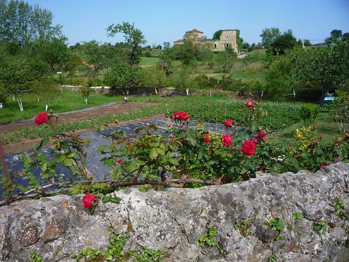 Roses in Colindres de Arriba