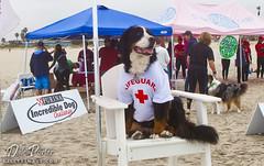 DogSurf_Purina2011_105