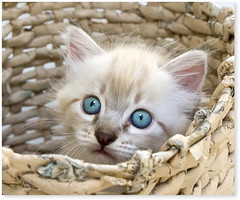 She found a hiding place... (Fernando Felix) Tags: portrait pet cats cute topf25 face look cat poser kitten bravo funny sweet tabby kitty kittens gato gata tabbies graceful gatto gatti gatinho gatinhos cowcat beautysecret 100faves 50faves 35faves 25faves bestofcats artofimages