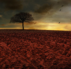 The Red Planet (Martyn Starkey) Tags: soe firstquality impressedbeauty aplusphoto theunforgettablepictures thesecretlifeoftrees vosplusbellesphotos artofimages
