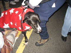 A dog in line waiting to woo hoo the new president!