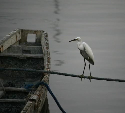balancing act by jimpg2_2010.