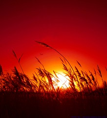 The calm before the storm... (law_keven) Tags: sunset red england sky sun london plane reeds silhouettes barnes londonwetlandcentre explore500 golddragon