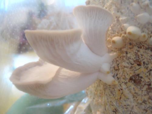 fungi day 5