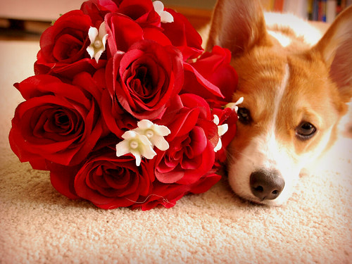 Happy Valentines Day From Gibson!