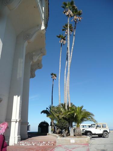 tall, skinny palms.