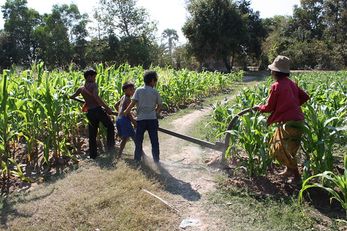 Agricultura en el Sudeste Asiático (Parte 1)