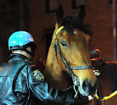 If Horses Could Wink (androosh) Tags: nyc newyorkcity horses horse eye animal animals head helmet police nypd pony cop gothamist wink officer lawenforcement equine policeman equus drdoolittle midtownwest aplusphoto