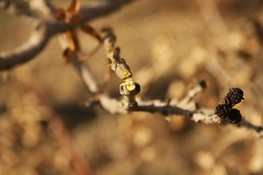 Broken (hapal) Tags: tree broken branch dof iran blossom bokeh creativecommons iranian  sahdow    canoneos40d  hamidnajafi