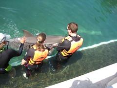 dolphin training (ABC Dolphin Trainer Academy) Tags: training dolphin cancun animaltraining positivereinforcement operantconditioning dolphintraining entrenamientodeanimales refuerzopositiva