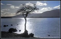 Found! (mcmax6) Tags: trees beach landscape scotland fujifilm 2009 hdr lochlomond flickrsbest s5pro ©derekbrown