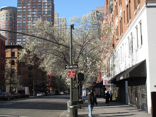 Flowering trees on the Upper West Side