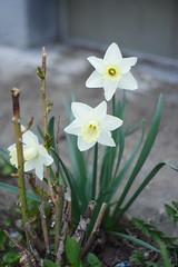 Flowers 2009-2111