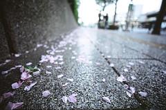 Petals (NateVenture) Tags: color public japan analog subway japanese tokyo iso200 nikon bokeh wideangle slidefilm transportation  fujifilm  positive pushed nikkor boke provia manualfocus provia100f  uwa fe2 1828 ultrawideangle afd 18mmf28d  pushed1stop 1828d