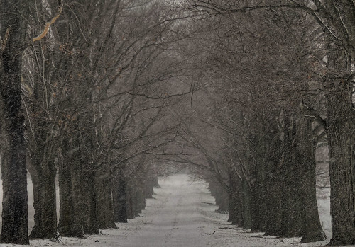 Winter road in Millstone
