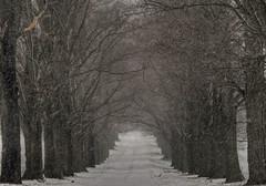 [フリー画像] [人工風景] [道の風景] [並木道] [アメリカ風景] [ニュージャージー州]      [フリー素材]