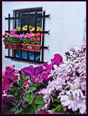 SOT DE CHERA (NUR FS) Tags: naturaleza flores ventana pueblo natura colores monte montaña sote cruzadas sotdechera