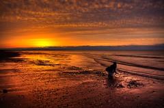 collecting shells (SeeSkinner) Tags: ocean sunset beach clouds sand pentax atlantic pei hdr brackley k100d