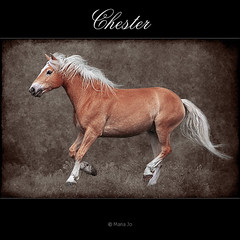 Chester (okkibox) Tags: horse netherlands animals caballo cheval pony pferd 2009 soe paard gouda haflinger galope blueribbonwinner equuscaballus bej mywinners abigfave pentaxk10d anawesomeshot theunforgettablepictures platinumheartaward theperfectphotographer azofdigitalediting professionalequineimages ubej okkibox goldendiamondblog boxofhappymemories newgoldenseal
