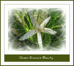 Queen Emma's Beauty (brendamb - Brenda) Tags: white flower hawaii lily maui best picnik hypnotique bej citrit theunforgettablepictures betterthangood explorewinnersoftheworld exploreflowers worldnaturewildlifecloseup grrreatworks brendamb juliesgalleryofnature queenemmasbeauty