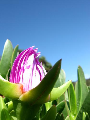 Flora on Kawau Island, New Zealand