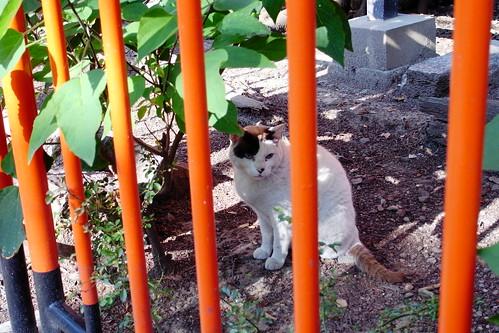 Today's Cat@20090602