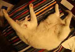 relax (waschbaer - raccoon) Tags: white cute cat paw soft sweet touch katze velvety pfote streching weis