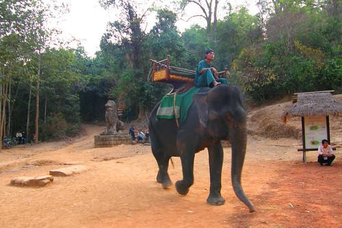 19.從巴肯山下來的大象