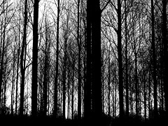 Spectral (Lanvacette) Tags: trees light blackandwhite bw abstract forest mono monotone spectral