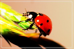 040_big (arkawe) Tags: blur macro green eye nature butterfly bug insect photography spider fly nikon dragonfly ant bee micro ladybug  d90       grashoper       arkawe  extreamemacro  sigmamacrolend105mm