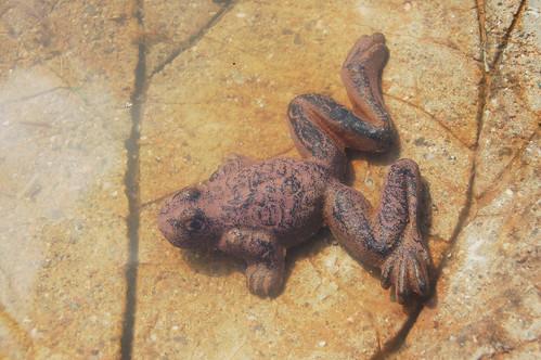 Frog taking a bath