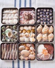 20110523_Collections-Seashells