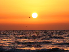Sunset in Genaveh (Mahsa3611) Tags: sunset sea orange sun water birds flying reflex iran  mahsa   genaveh    cmwdorange  mahsa3611