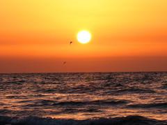 Sunset in Genaveh (Mahsa3611) Tags: sunset sea orange sun water birds flying reflex iran ایران mahsa پرنده دریا genaveh مهسا خورشید رنگها cmwdorange گناوه mahsa3611