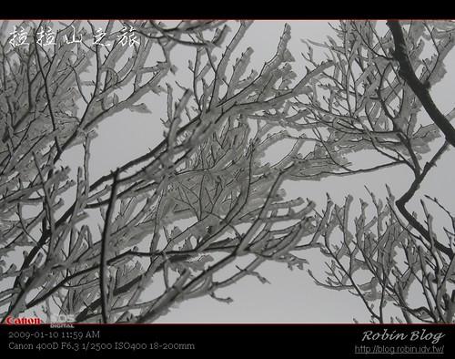你拍攝的 20090110數位攝影_拉拉山外拍254.jpg。