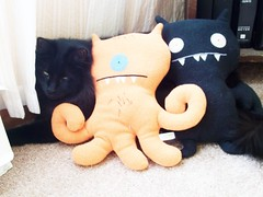 You're only ugly on the inside, (Owl Eyes*) Tags: blackcat uglydolls
