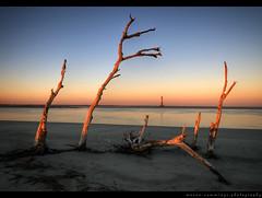 Grow (Mason Cummings) Tags: ocean sunset sky lighthouse tree beach nikon branches grow southcarolina follybeach nd6 planetearth sts9 d300 sigma1020 morrisislandlighthouse tonemapped singleexposurehdr
