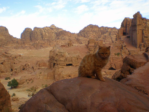 A cat at Petra, Jordan