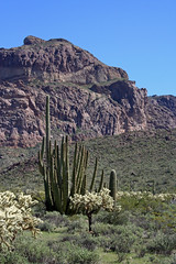 organ pipe and mountain (lars hammar) Tags: arizona mountain biospherereserve nationalmonument organpipecactus organpipenationalmonument